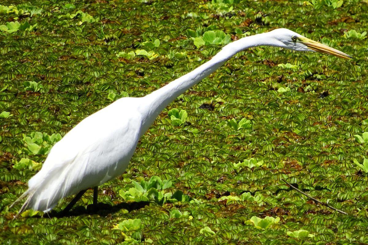 Moreno se posiciona como un destino ideal para el avistaje de aves