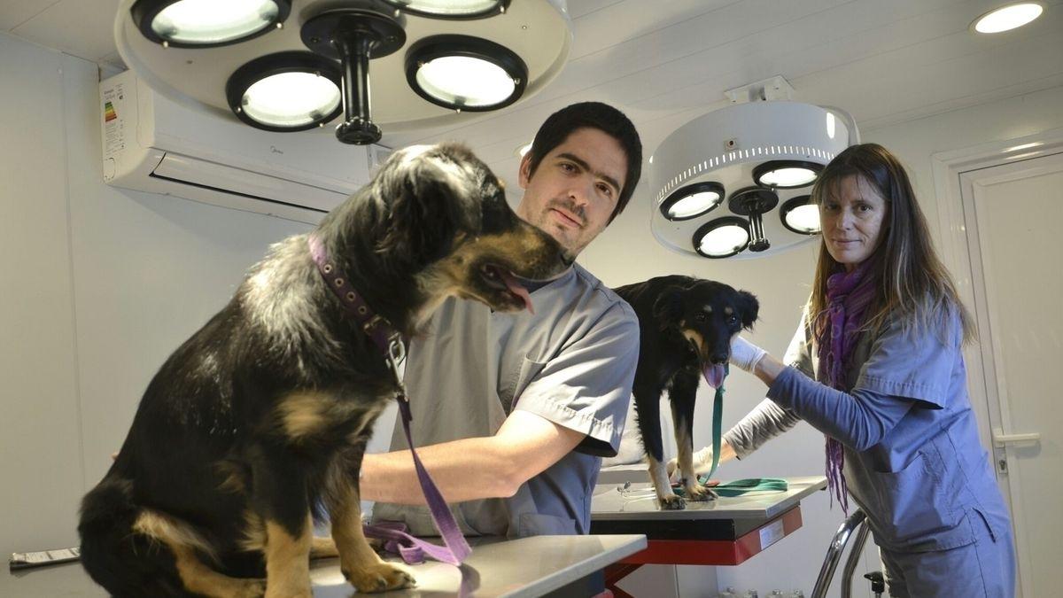 Morón: juntan firmas para abrir un hospital veterinario